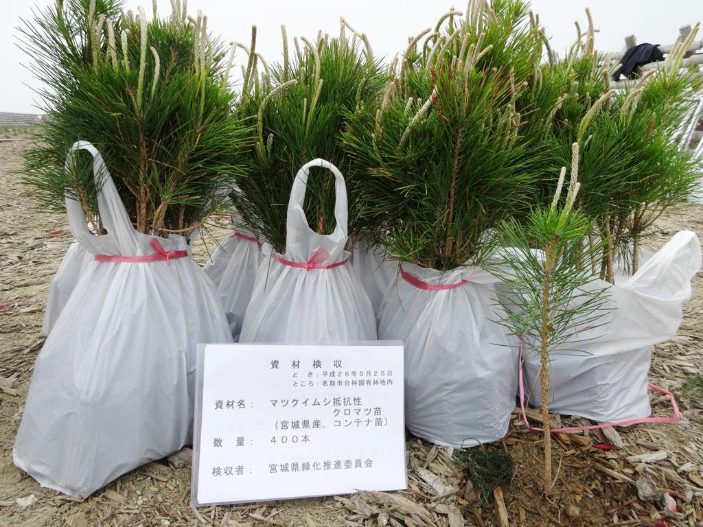 名取・潮除須賀松(しおよけすかまつ)の森 再生植樹式(その2)